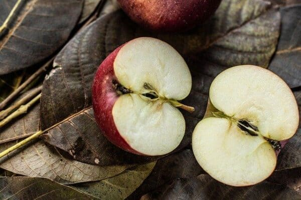 what not to feed a dog - two halves of apples