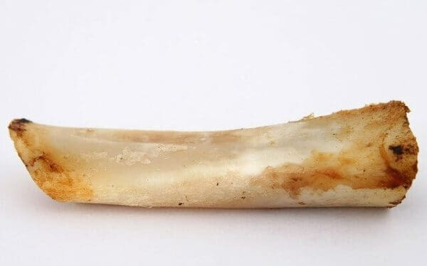 what not to feed a dog - a bone