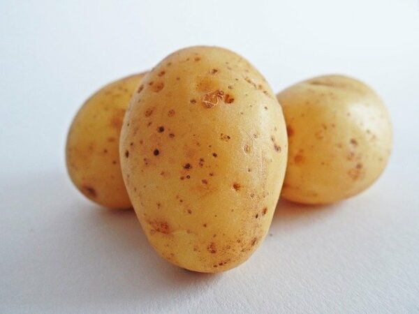 what not to feed a dog - potatoes