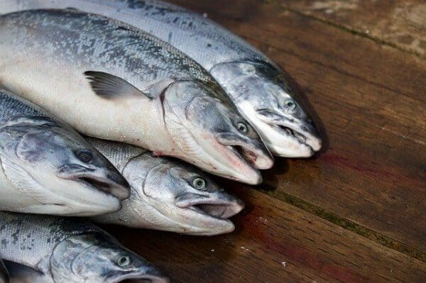 what not to feed a dog - five raw, whole fish
