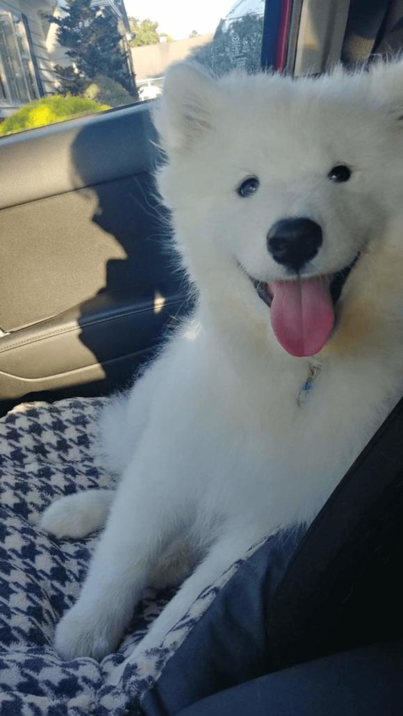 dog anxiety in a car