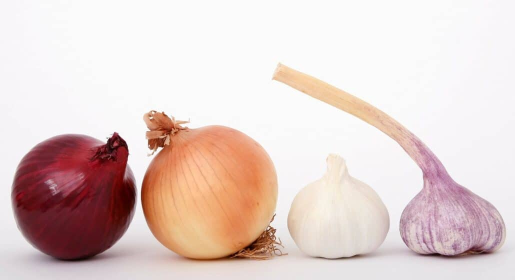 what not to feed your dog- onions and garlic