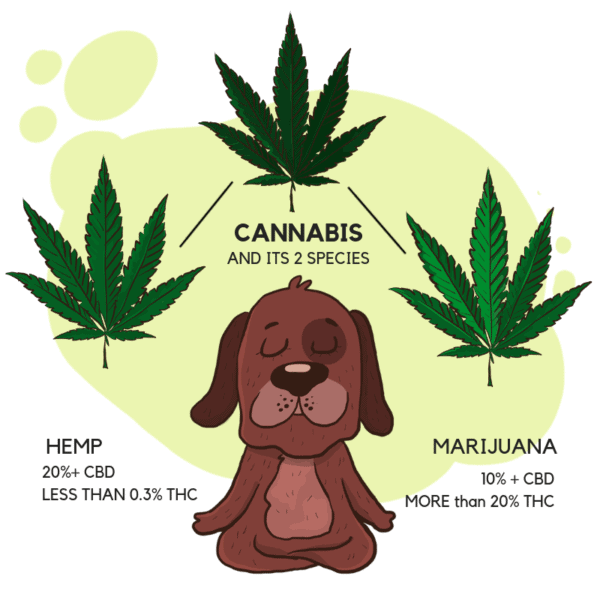 CBD oil for dogs with anxiety