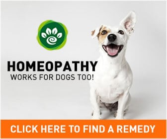 "Advert showing a happy Jack Russell dog, text says ""Homeopathy works for dogs too!"" and ""Click here to find a remedy""."