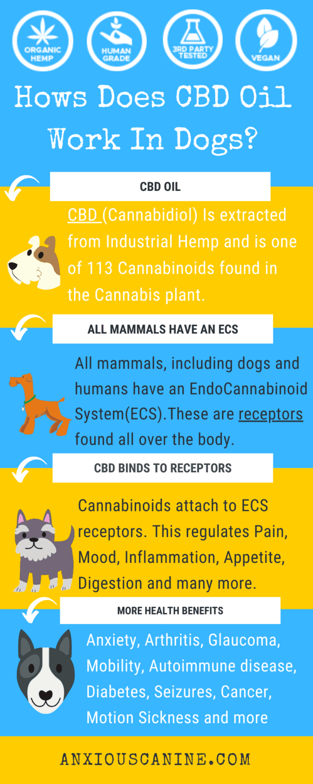 CBD treats for dogs with anxiety- an infographic of how CBD works for dogs including health benefits of CBD