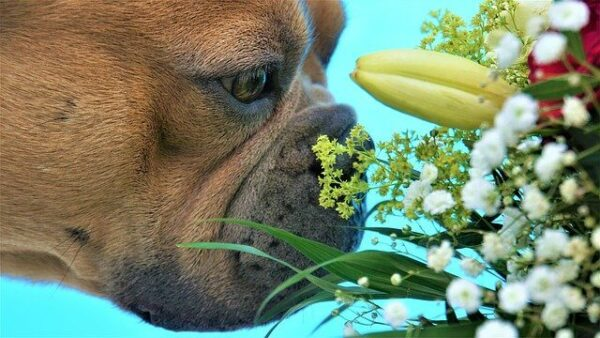 what do dogs hate - dog sniffing flowers