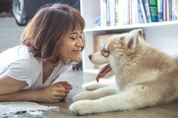 why should I get a dog