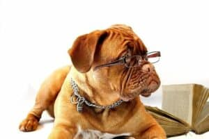 I saw my dog drinking toilet water - dog wearing glasses and reading a book