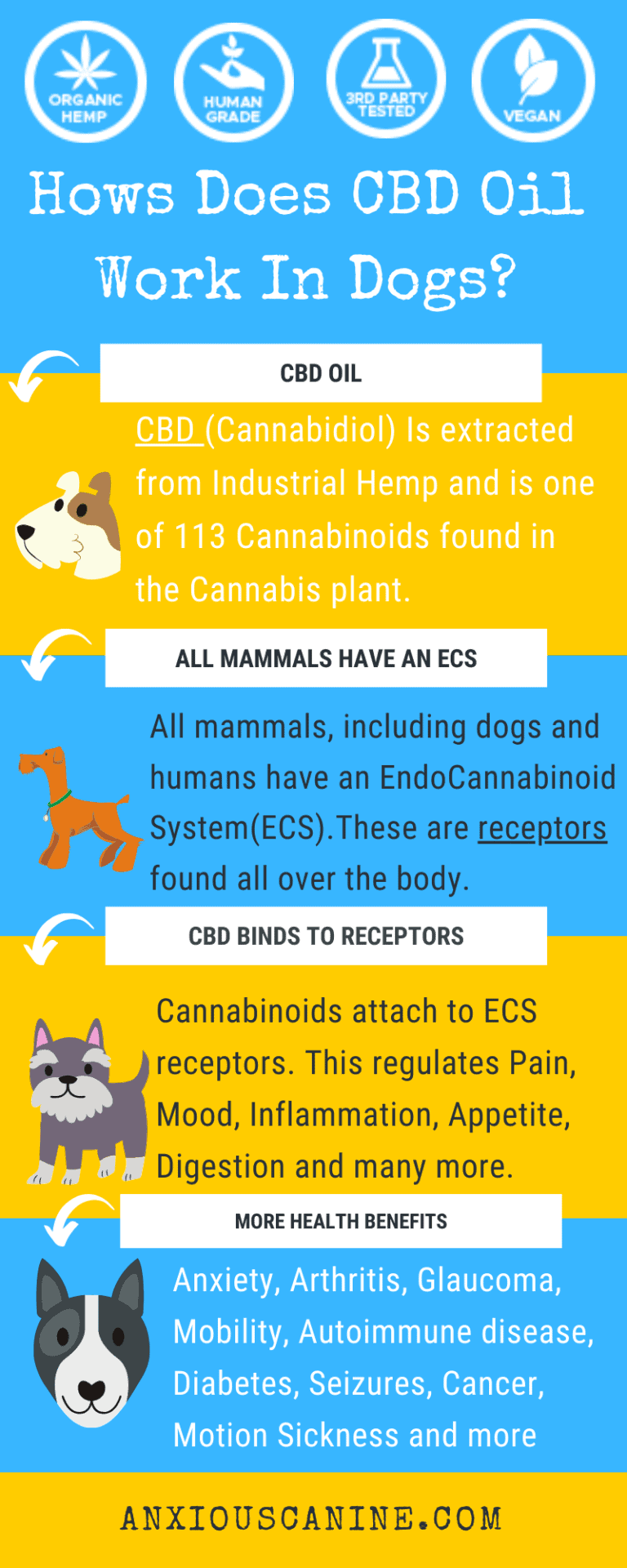 CBD for dogs with osteoarthritis - an infographic of how CBD works in dogs plus health benefits