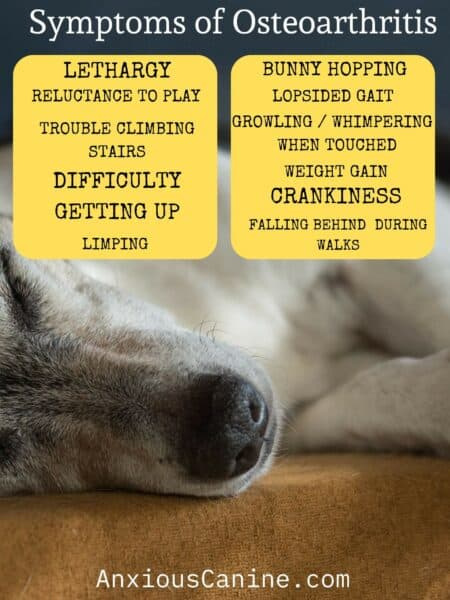 cbd for dogs with osteoarthritis - an infographic of symptoms of osteoarthritis with a dog lying down in the background