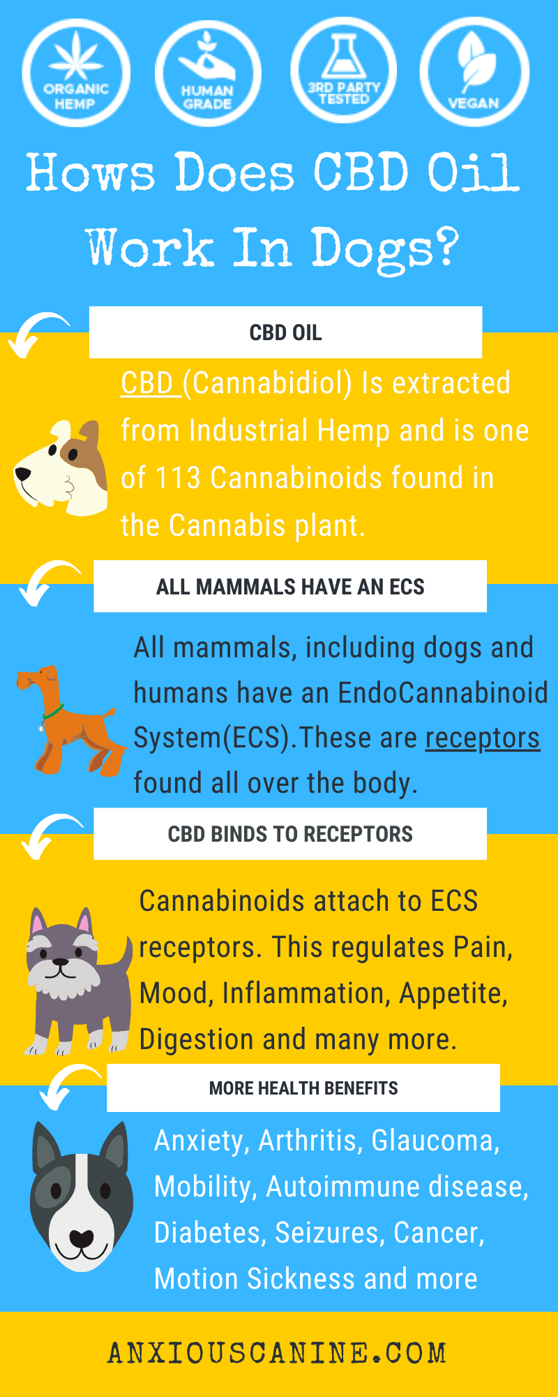 hemp for dogs with arthritis - an infographic of how CBD works in dogs