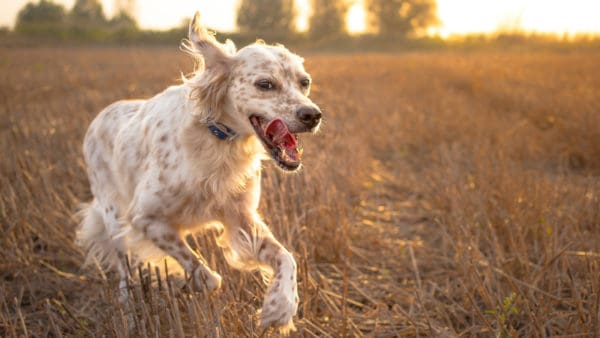 treating dog anxiety - anxious dogs can recover to lead a happy healthy life.
