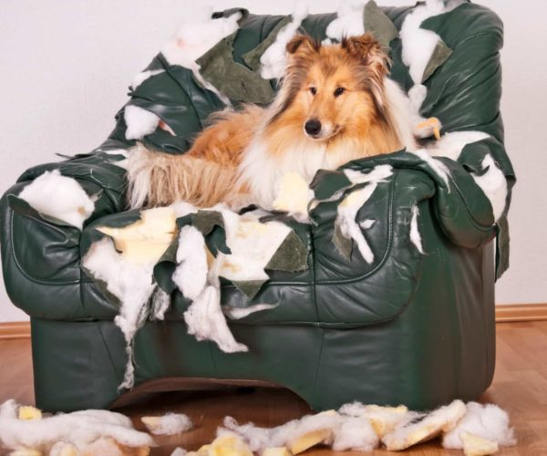Destructive dogs – Stop them destroying your home