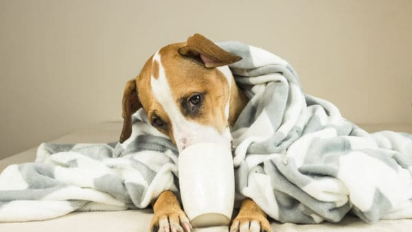 CHAMOMILE FOR DOGS - sick dog drinking tea