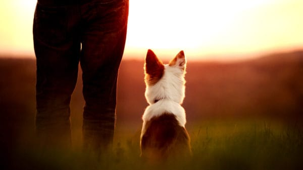 dog and owner looking at a sunset, picture taken from behind