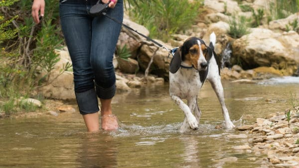dog going for a walk in a stream with his owner