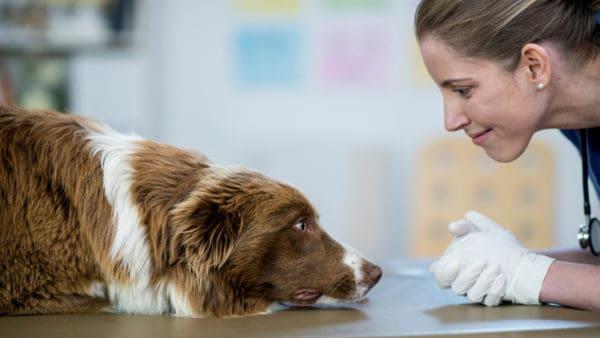 depressed dog seeing the vet