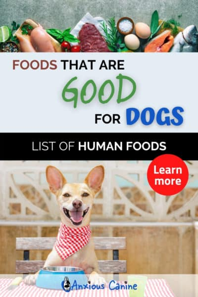 A pinterest pin showing an image of healthy food at the top followed by an image of a dog sat at a dining room table and wearing a red and white checked napkin around his neck