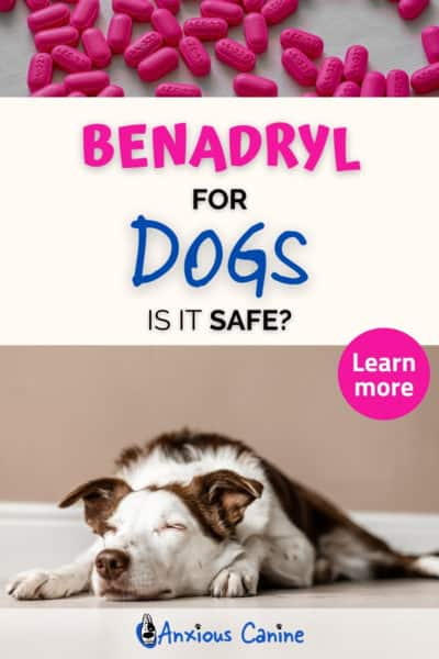 Benadryl for dogs - a Pinterest pin showing two images, on image shows a dog unconscious on the floor while the other shows pink Benadryl pins