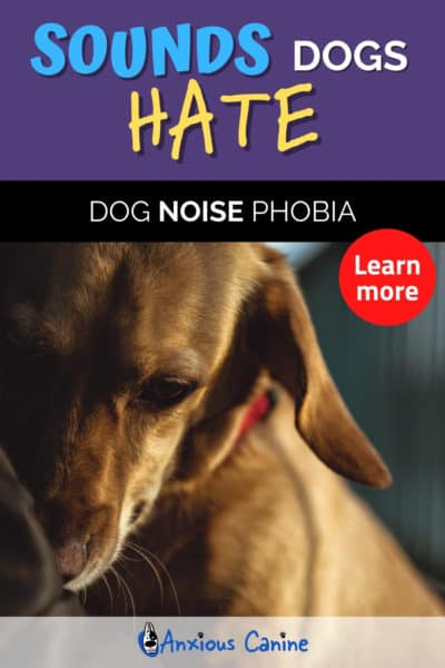 Sounds dogs hate - Purple Pinterest pin showing a scared dog.
