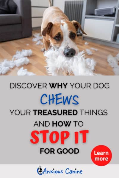 Pinterest pin showing an image of a dog ripping up a cushion with all the white stuffing all over the floor