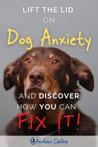 Pinterest pin showing a close up on an anxious dog