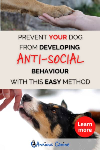 Pinterest pin showing two images, one image is of a paw being placed in a persons han, the other image shows a dog licking a hand.