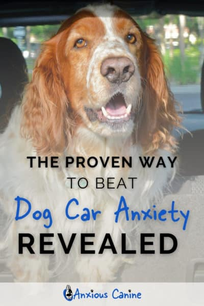 Pinterest pin showing a dog sitting in a car