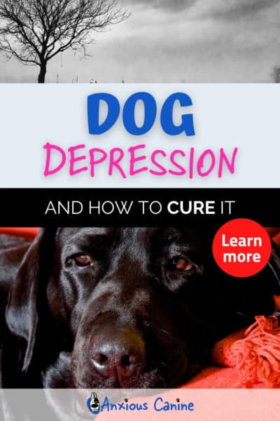 Pinterest Pin showing a depressed black Labrador lying on the floor
