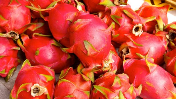 Red colored dragon fruit