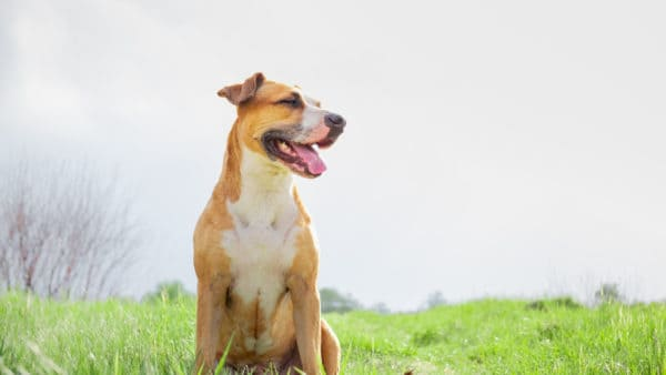 Healthy dog sitting on the grass in a field.