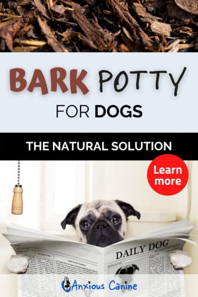Pinterest pin about bark potty, showing a Pug on the loo reading a newspaper
