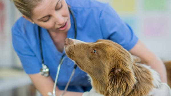Vet examining an anxious dog