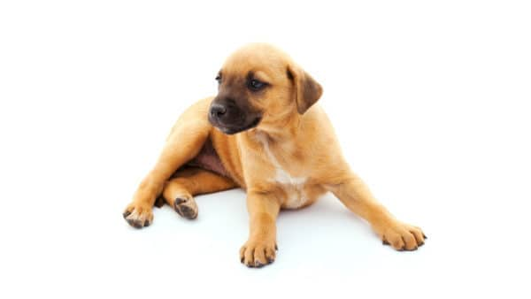 Dog names that start with G - puppy lying on the floor, totally white background