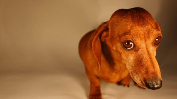 sad looking dog - no salami