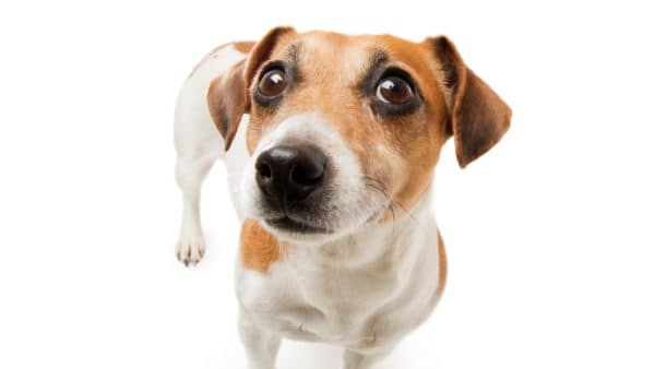can dogs eat salami -  unhappy dog